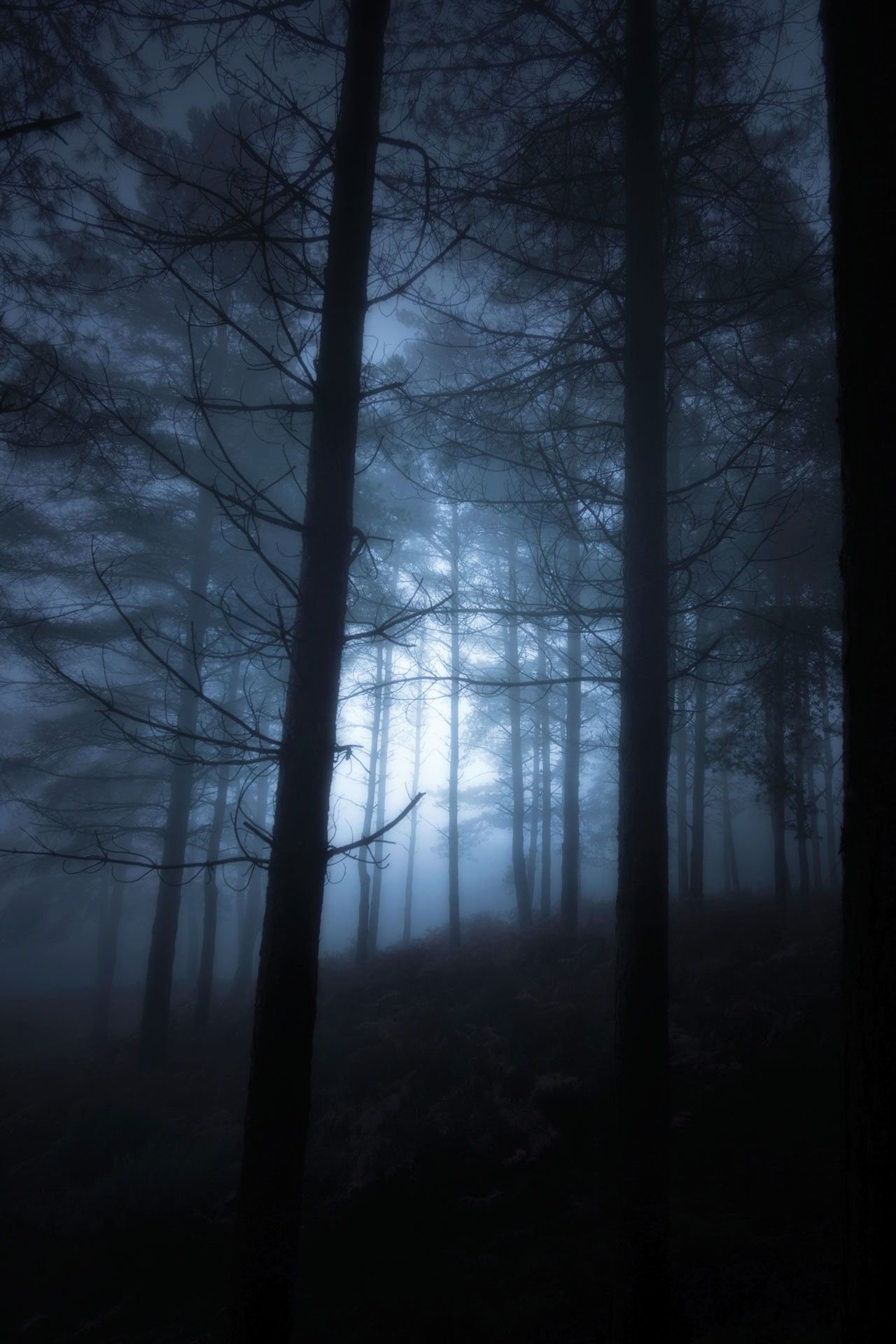Moonlit forest looking up at trees bathed in blue light
