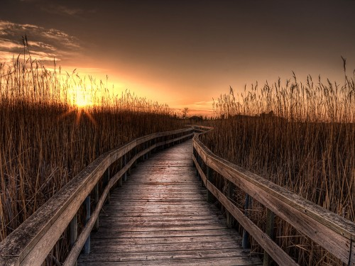 Coastal boardwalk among tall grasses at autumn sunset